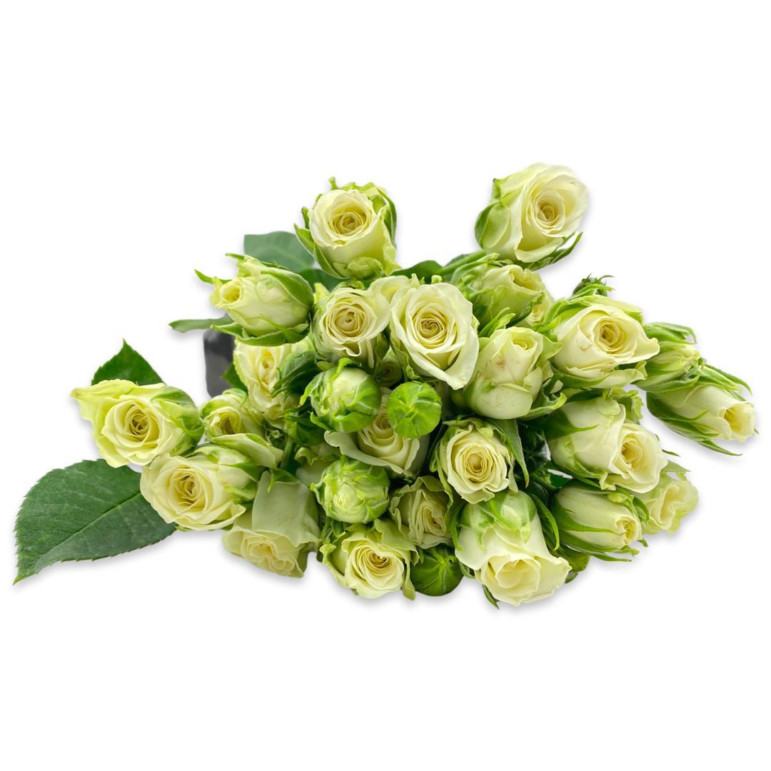سبراي روز (أبيض) ' الزهور بالجملة'