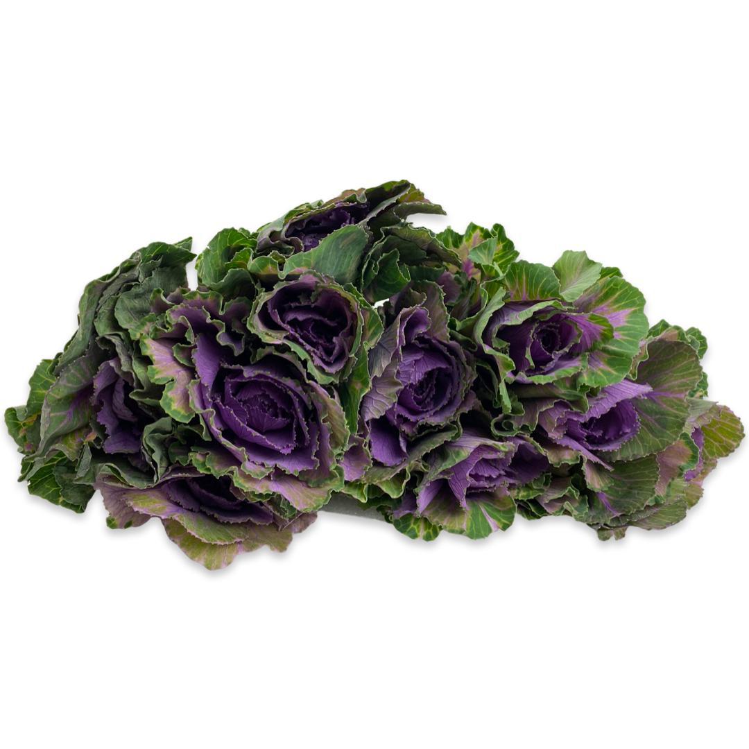 Brassica - Purple 'Wholesale Flowers'
