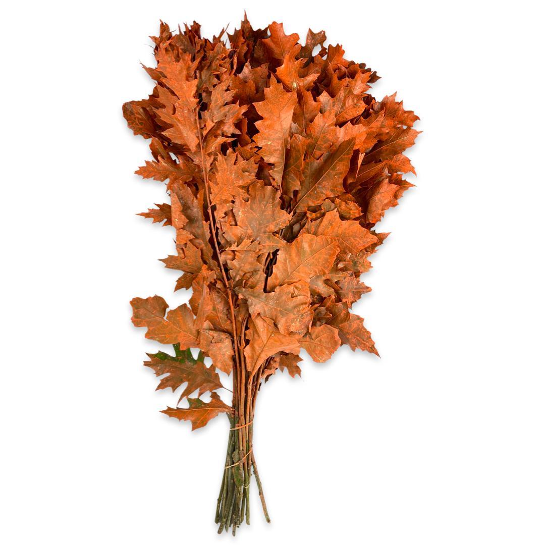 Oak Leaf - Orange 'Wholesale Flowers'