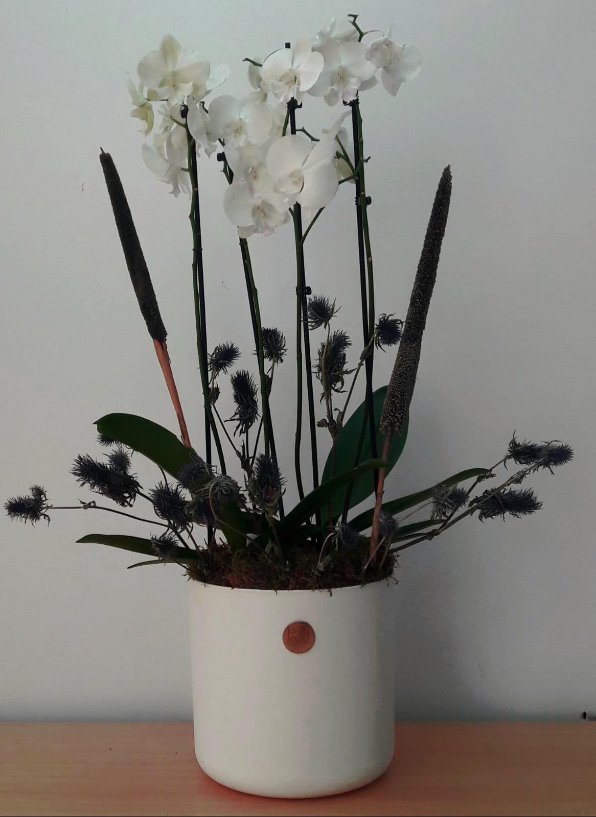 Classic Bouquet Indoor Plants