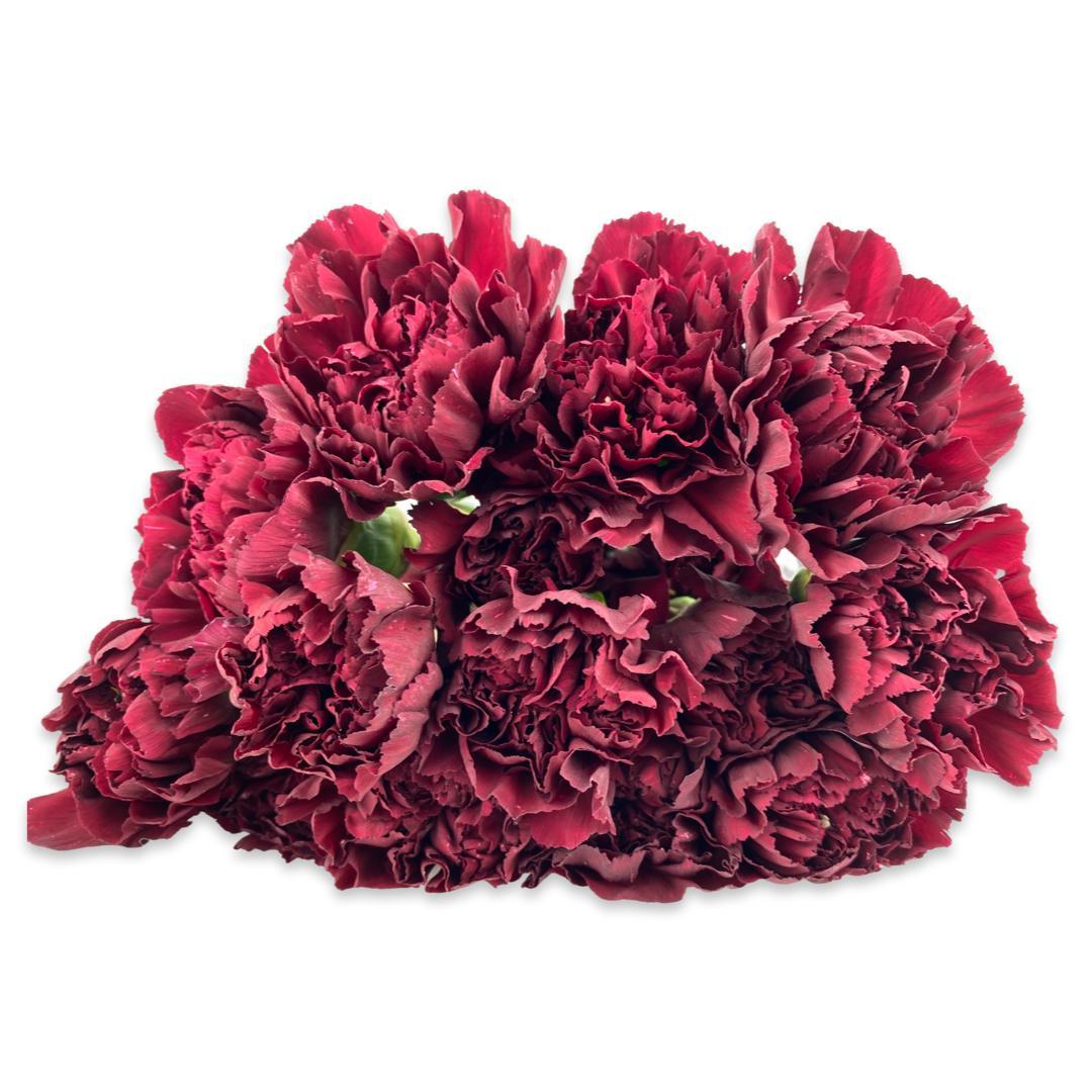 قرنفل - أحمر  الزهور بالجملة