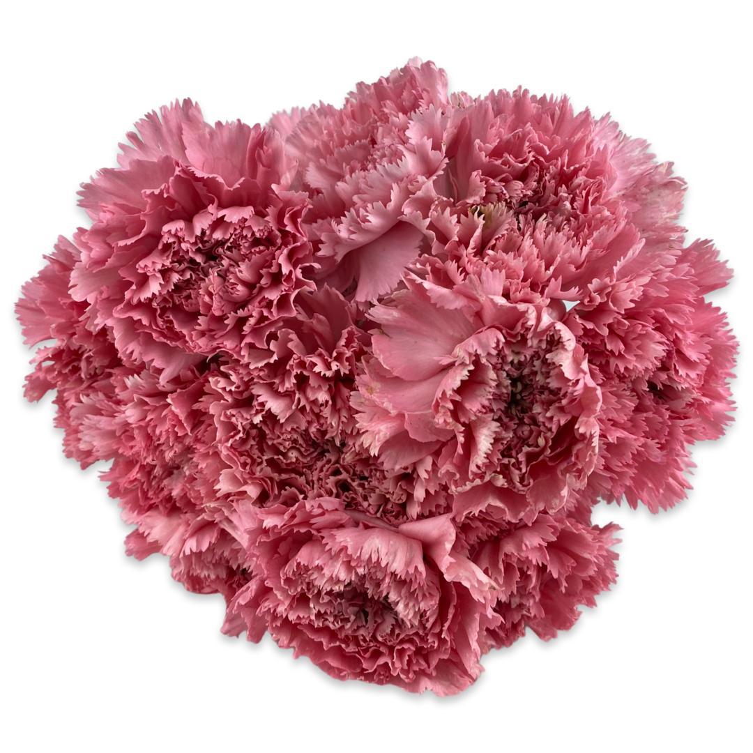 قرنفل - وردي باهت  الزهور بالجملة