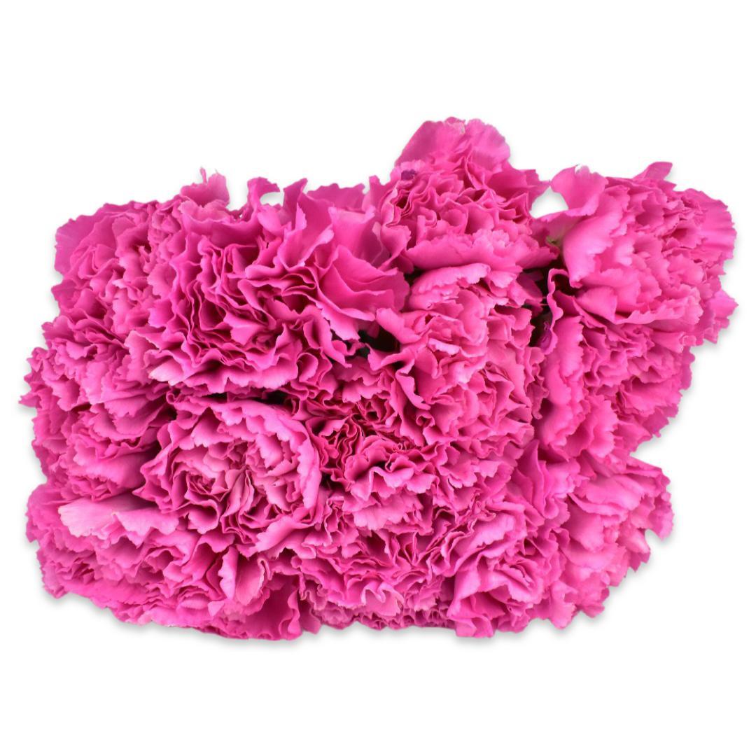 قرنفل - وردي  الزهور بالجملة