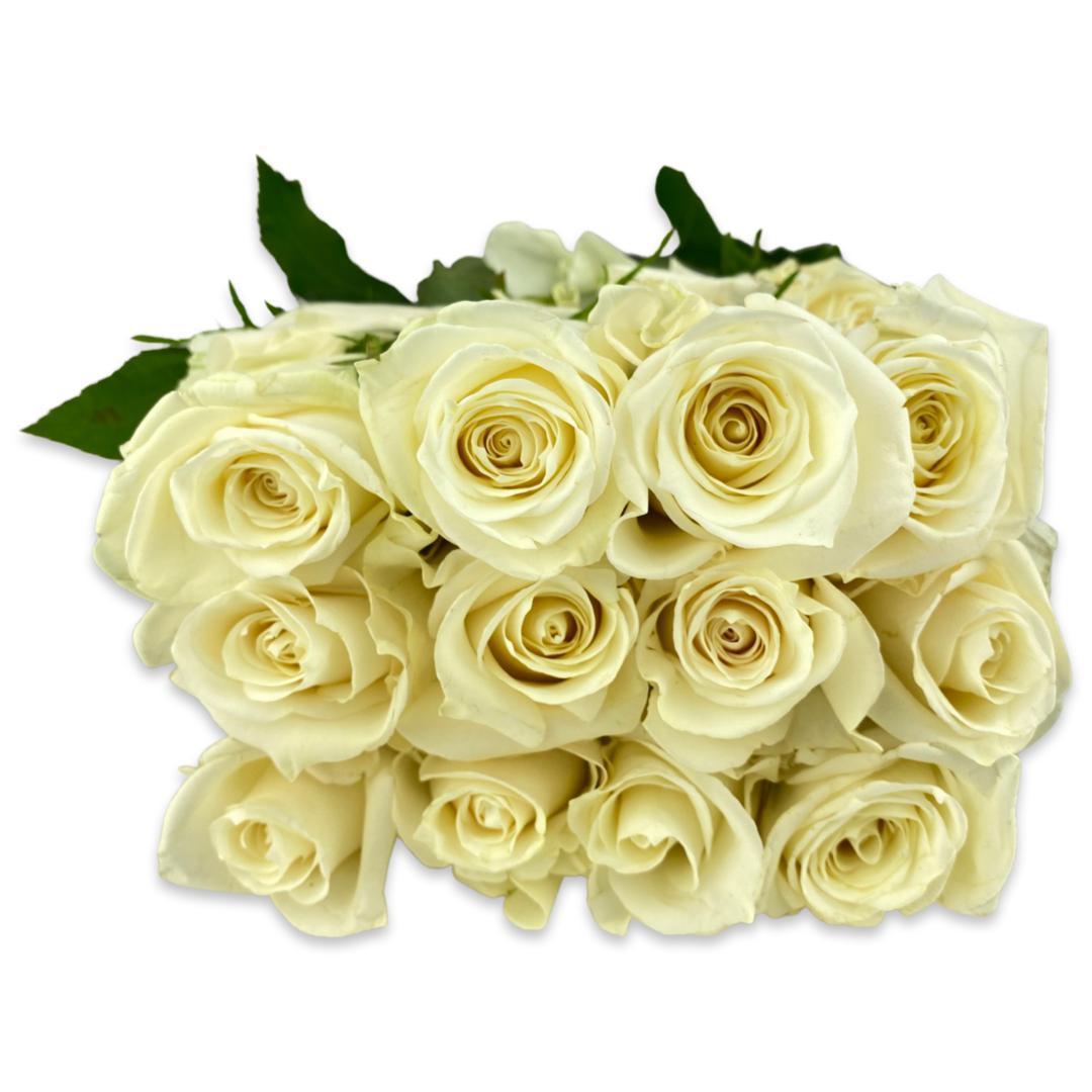 ورد  أبيض   الزهور بالجملة