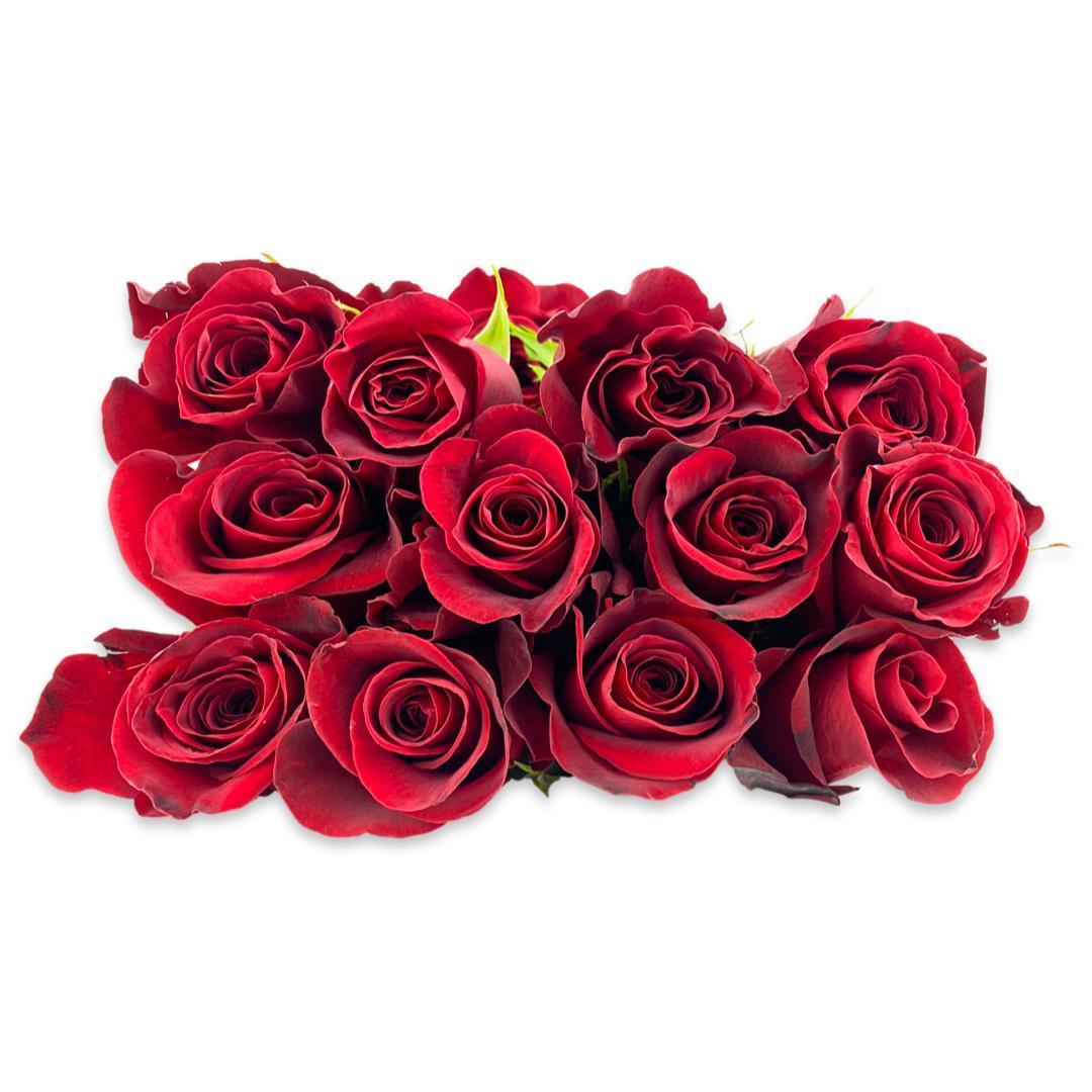 جوري - أحمر  الزهور بالجملة